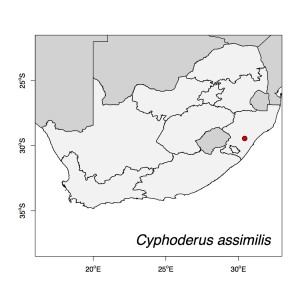 Cyphoderus assimilis Map