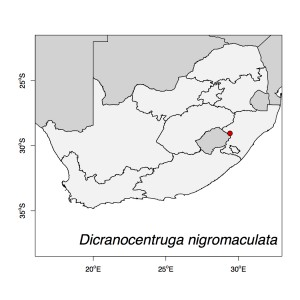 Dicranocentruga nigromaculata Map