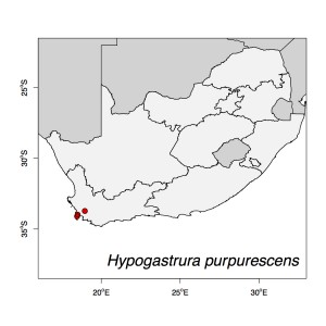 Hypogastrura purpurescens Map