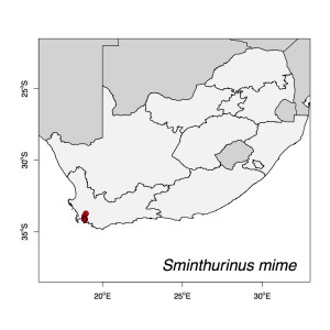 Sminthurinus mime Map
