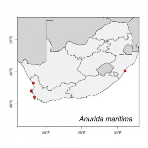 Anurida maritima Map