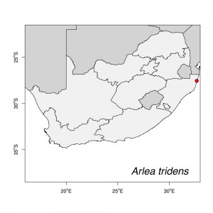 Arlea tridens Map