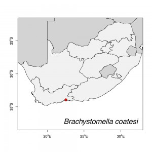 Brachystomella coatesi Map