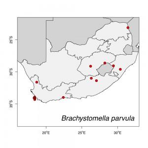 Brachystomella parvula Map