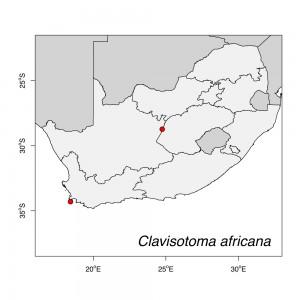 Clavisotoma africana Map