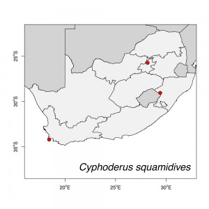 Cyphoderus squamidives Map