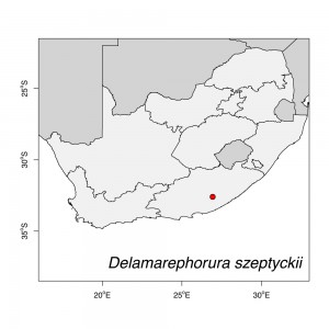 Delamarephorura szeptyckii Map