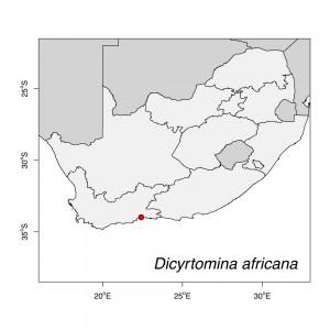 Dicyrtomina africana Map