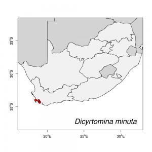 Dicyrtomina minuta Map