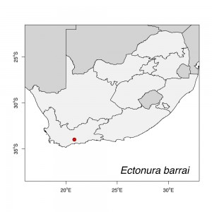 Ectonura barrai Map