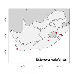 Ectonura natalensis Map