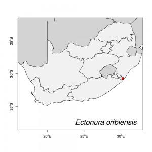 Ectonura oribiensis Map