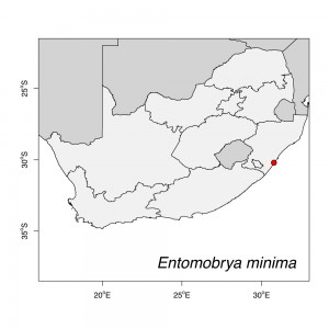 Entomobrya minima Map
