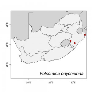Folsomina onychiurina Map