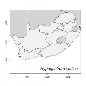 Hypogastrura viatica Map
