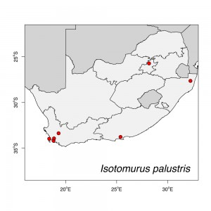 Isotomurus palustris map