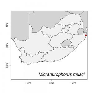 Micranurophorus musci Map
