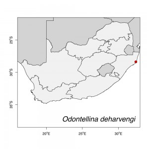 Odontellina deharvengi Map