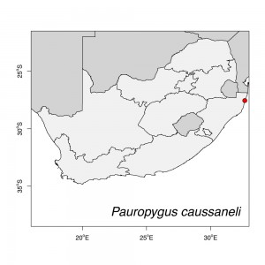 Pauropygus caussaneli Map