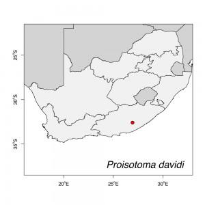 Proisotoma davidi Map