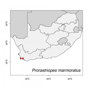 Prorastriopes marmoratus Map