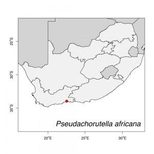 Pseudachorutella africana Map