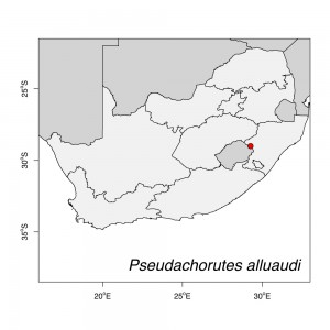 Pseudachorutes alluaudi Map