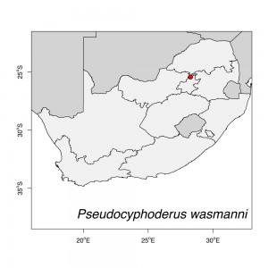 Pseudocyphoderus wasmanni Map