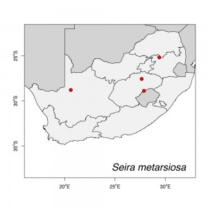 Seira metarsiosa Map