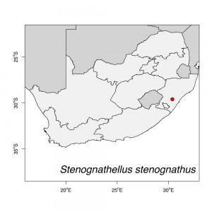 Stenognathellus stenognathus Map